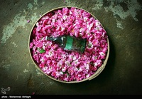 Golab being make in Qamsar - Kashan 20.jpg