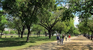 Facing east on the National Mall, as viewed near the 1300 block of Jefferson Drive, S.W. in April 2010. Rows of American elm trees line the sides of a path traversing the length of the Mall.
