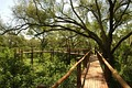Treetop Boardwalk. All facilities at Mapungubwe National Park are wheelchair-friendly.