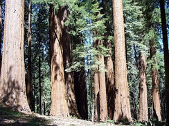 Sequoia National Park is located within Tulare County