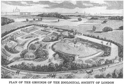 Plan of the Zoological Society of London (1829)
