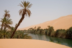 An Idehan Ubari oasis lake, with native grasses and date palms