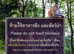 "Macaque on a ""Please do not feed monkeys"" sign in Ko Chang, Thailand."