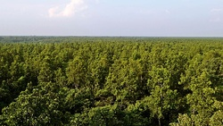 Sal forests in Gazipur District