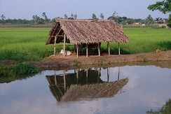 Rice, cattle and fishing in rivers and ponds are important sources of food.