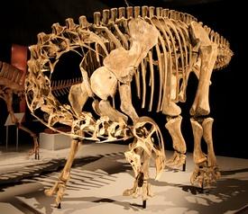 Nigersaurus mount.jpg