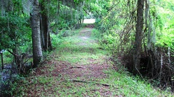 Similar dyke in Hampton, South Carolina, United States, in 2010, long abandoned and reclaimed by woodland[12]