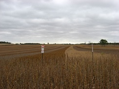 Different varieties of soybeans being grown together