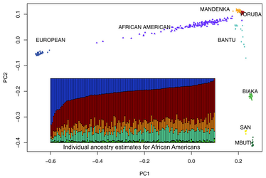 Genetic clustering of 128 African Americans, by Zakharaia et al. (2009). Each vertical bar represents an individual. The color scheme of the bar plot matches that in the PCA plot.[159]