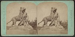 Tiger and cubs, from Robert N. Dennis collection of stereoscopic views.jpg