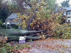 A downed tree in Cheltenham Township, Pennsylvania.