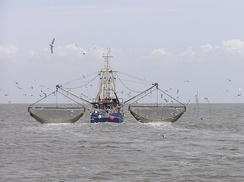 Shrimp cutter near Südfall