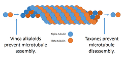 Vinca alkaloids prevent the assembly of microtubules, whereas taxanes prevent their disassembly. Both mechanisms cause defective mitosis.
