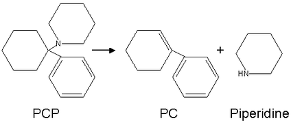 Conversion of PCP into PC and piperidine by heat.