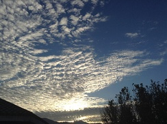 Sunrise scene giving a shine to an altocumulus stratiformis perlucidus cloud (see also 'species and varieties)