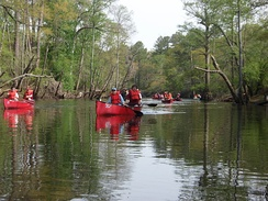 Boy Scouts canoeing on the Blackwater River, Virginia