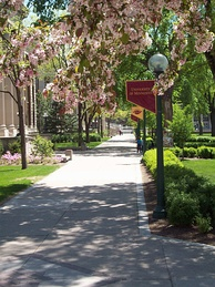 The eastern edge of the Northrop Mall, Spring 2008