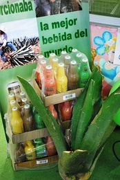 Display of bottled pulque at the Feria de Pachuca