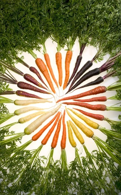 Researchers at the USDA have selectively bred carrots with a variety of colors.
