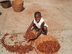 Ребёнок, перебирающий какао-бобы