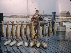 Big-game saltwater fish caught off of Cape Hatteras in 1949