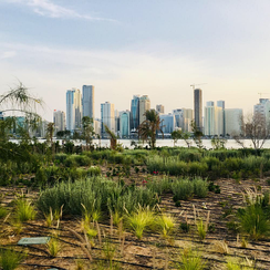 Inside Al Noor island with Sharjah skyline in the back.