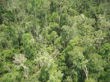 Peat swamp forest in Kalimantan