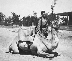 A camel soldier of the native forces of the British army, early 20th century.