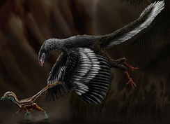 Restoration of Archaeopteryx chasing a juvenile Compsognathus