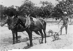 Cotton plowing in Togo, 1928