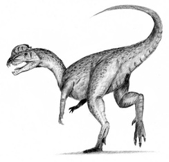 Dilophosaurus, one of the many extinct dinosaur genera. The cause of the Cretaceous–Paleogene extinction event is a subject of much debate amongst researchers