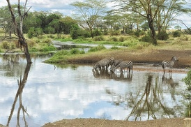 Site#156: Serengeti National Park, an example of a natural heritage site.