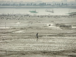 Mud clams, oysters and shrimp are raised in Anhai Bay off Shuitou.[50]