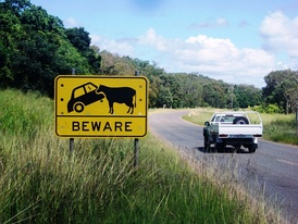 BEWARE sign near Cooktown, Cape York Peninsula