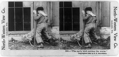"""The early bird catches the worm"" Stereograph published in 1900 by North-Western View Co. of Baraboo, Wisconsin, digitally restored."