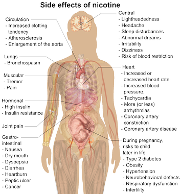 Possible side effects of nicotine.[60]