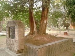 The tree in Alfred Park, Allahabad (now Prayagraj), where Azad died