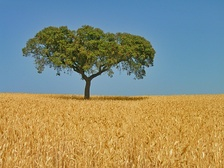 "The Alentejo is known as the ""bread basket of Portugal"", being the country's leading region in wheat and cork production."