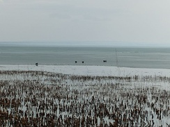 Ice Melting on Lake Balaton