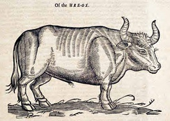 "The ""Ure-Ox"" (Aurochs) by Edward Topsell, 1658"