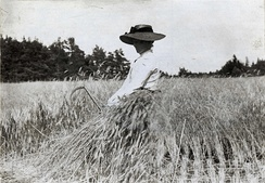 Rye harvest on Gotland, Sweden, 1900–1910.