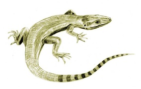 Archaeothyris was a very early synapsid and the oldest known.