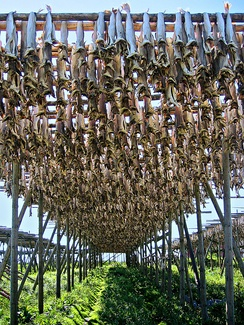 Stockfish has been exported from Lofoten in Norway for at least 1,000 years