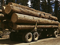Lumber is an example of a raw material that can be saved through implementation of pollution prevention processes.