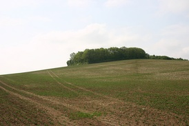 Ashingdon hill, possible location of the battle.
