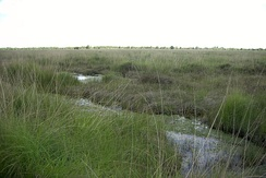 Ewiges Meer Nature Reserve, raised bog element of the remains of a bog in East Frisia