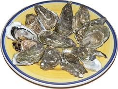 Raw oysters, which are still alive, presented on a plate.