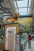 Hall of Mammals