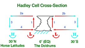 The Hadley cell carries heat and moisture from the tropics towards the northern and southern mid-latitudes.