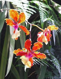 Орхидеи в Национальном саду орхидей